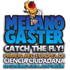 Melanogaster: Catch the Fly!