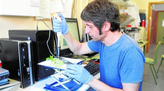 Estudiantes de un centro público español, pioneros en secuenciar el genoma de un ser vivo